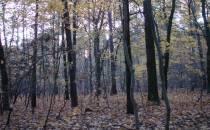 NABU: Waldprämie darf keine reine Flächenprämie sein