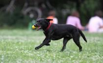 Verband beklagt Regel-Wirrwarr für Hundehalter