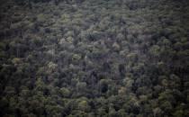 IG BAU fordert 11.000 zusätzliche Forstbeschäftigte